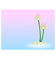 Pink Lotus Flower on Pink with Blue Background vector image
