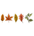 set of colorful autumn leaves isolated on white vector image vector image