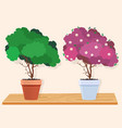 a green tree and a pink blossoming tree vector image