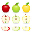 apple slice set isolated vector image