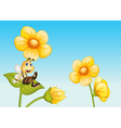 Bee on a flower vector image vector image