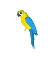 big blue and yellow sitting parrot isolated on vector image