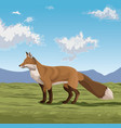 fox on the nature vector image vector image