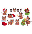 new year bull cartoon funny ox happy cow and new vector image