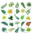 palm exotic leaves set vector image