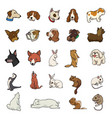 random animal collection vector image vector image