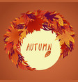 a bundle of bright filigree autumn leaves vector image vector image
