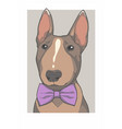 bullterrier with bowtie vector image