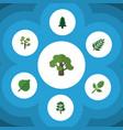 flat icon nature set of acacia leaf tree foliage vector image