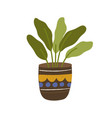 foliage houseplant in pot house plant with leaves vector image vector image