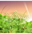 Green Goose Grass vector image