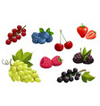 cartoon berries vegetarian nutrition set vector image