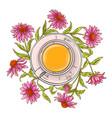 echinacea tea vector image