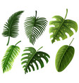 different kinds of leaves vector image