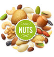 Nut Collection vector image