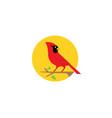 red cardinal bird nature sun logo vector image