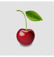 red cherry isolated white background vector image vector image