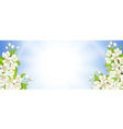 Banner with flowering cherry vector image vector image
