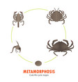 crab life cycle metamorphosis vector image vector image