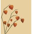 Decoration with physalis branches vector image vector image