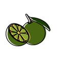 lemon citric fruit vector image