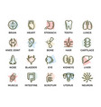 set of anatomy and organs colored line vector image