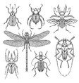set of various insects in hand drawn style vector image