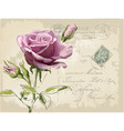 Vintage postcard with beautiful rose handdrawing