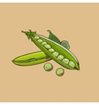 Green pea in vintage style Colored vector image vector image