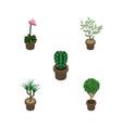 isometric plant set of tree fern peyote and vector image
