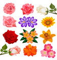 set of flower on a white background vector image