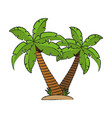 tropical palms icon vector image vector image