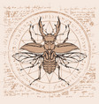 drawing of stag-beetle on an abstract background vector image vector image
