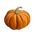hand drawn sketch of pumpkin in color isolated on vector image