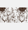 summer tulips and sunflowers line art hand vector image