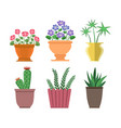 house plants types collection vector image vector image