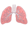 human lung cartoon vector image vector image
