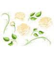 set of yellow roses beautiful decorative flowers vector image