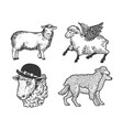 sheep farm set line art sketch vector image vector image