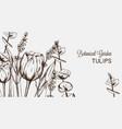 summer tulip flowers line art hand drawn vector image vector image