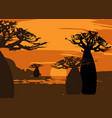sunset with landscape forest baobab trees vector image