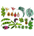 tropical exotic leaves fruits and flowers vector image vector image