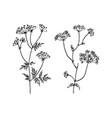 wild and herbs plants set botanical hand drawn vector image vector image