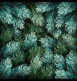 christmas fir branches vector image vector image