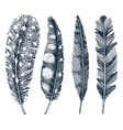 set rustic realistic feathers different vector image vector image