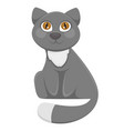 fluffy domestic cat with long tail and bright vector image