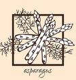 hand drawn asparagus vector image vector image