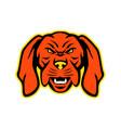 hungarian vizsla dog mascot angry vector image vector image