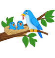 mother blue bird feeding babies in a nest vector image vector image