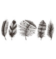 Set of rustic realistic feathers of different